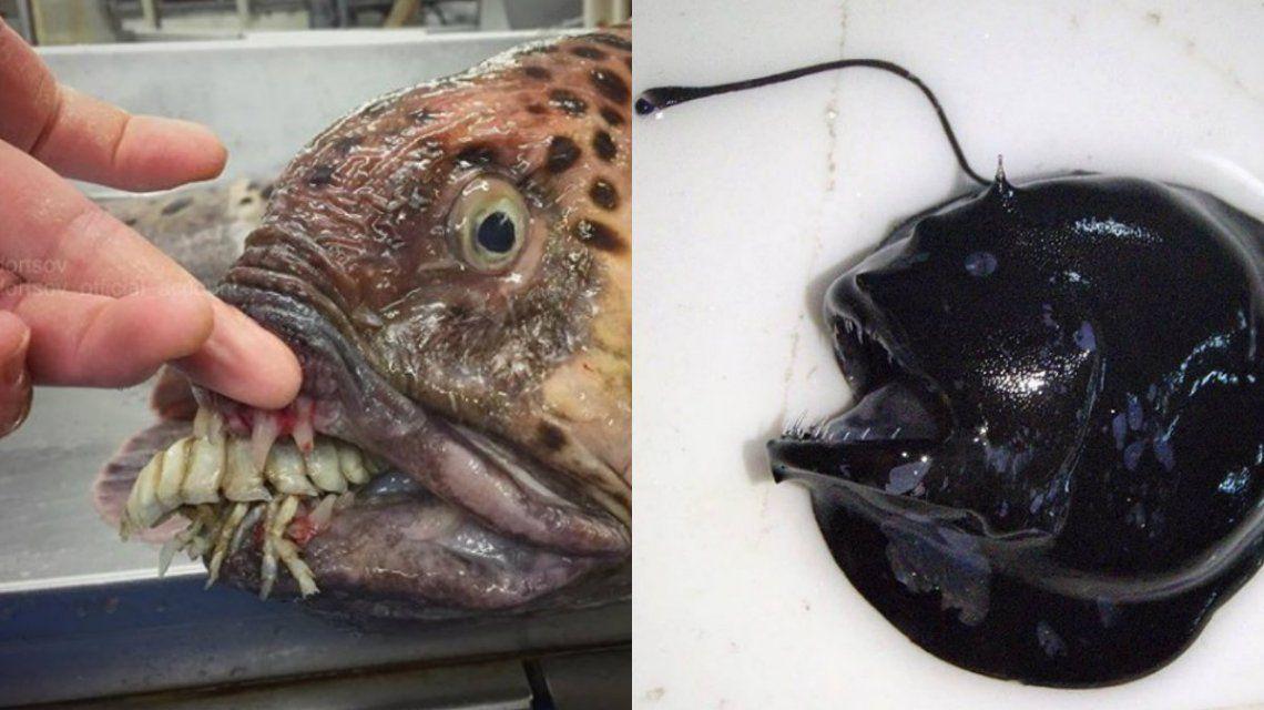 Este noruego mostró los ejemplares más extraños que ha visto