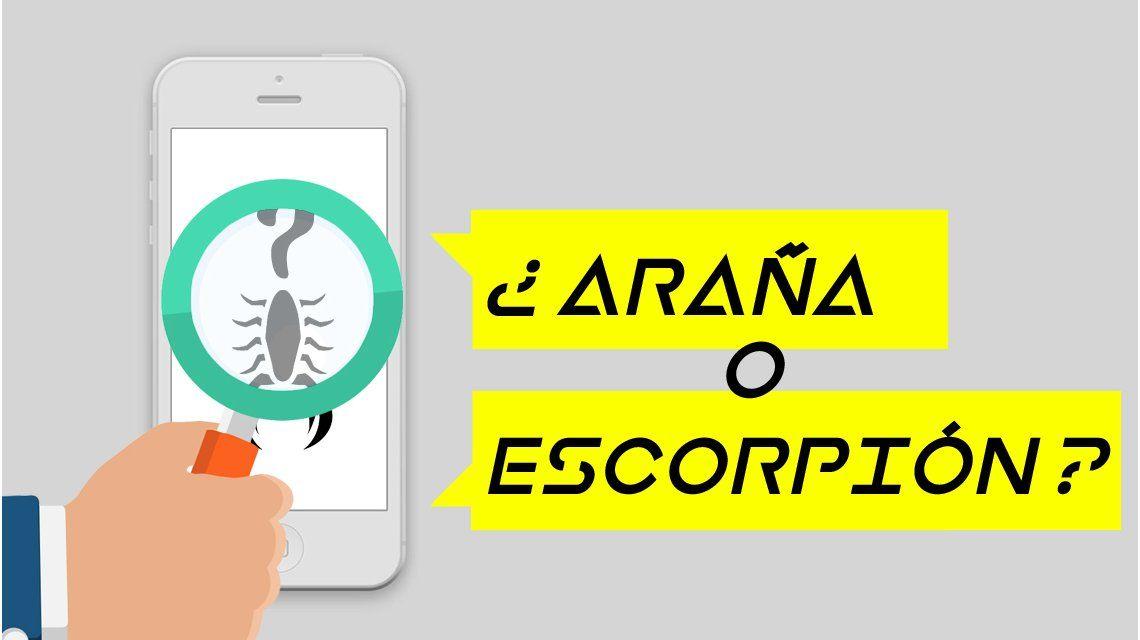 ¿Es araña o escorpión?: la app para identificar si es venenoso o no