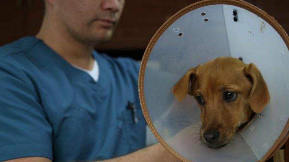 Lupita se recupera de la operación pero necesitará otras cirugías