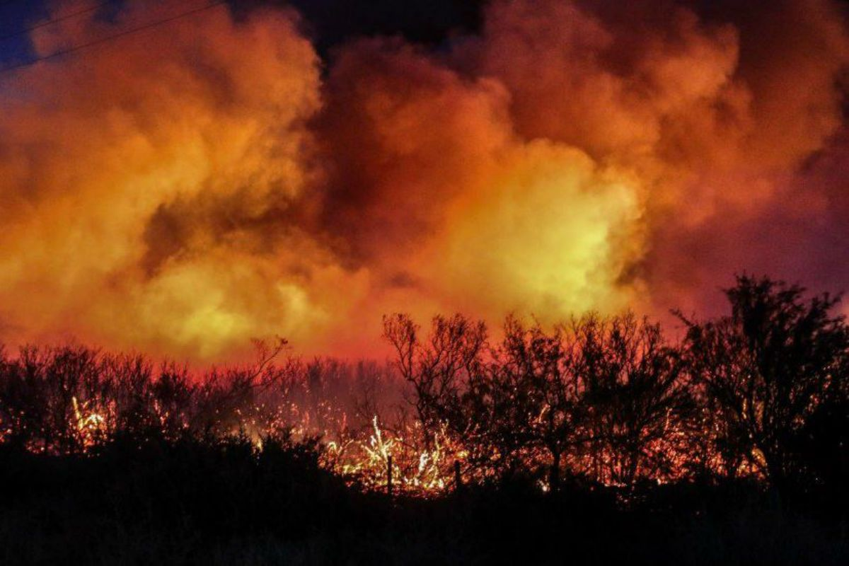 Casi 100 mil hectáreas fueron afectadas por el fuego