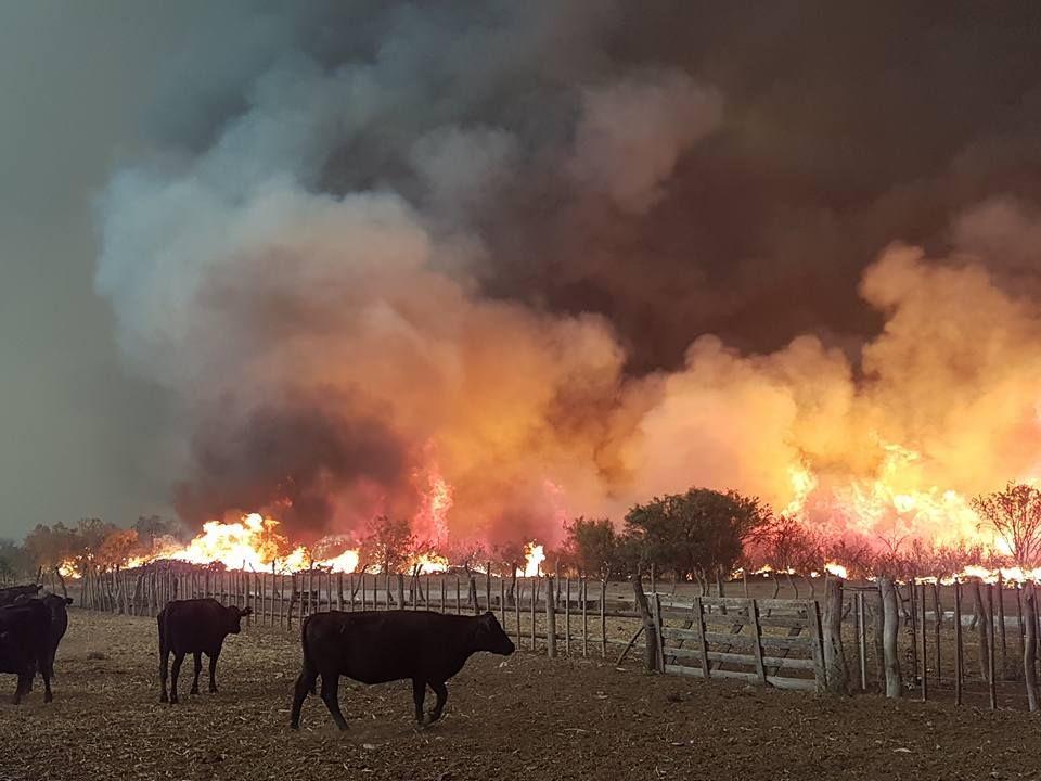 Graves incendios en Mendoza y La Pampa: se quemaron más de 230 mil hectáreas