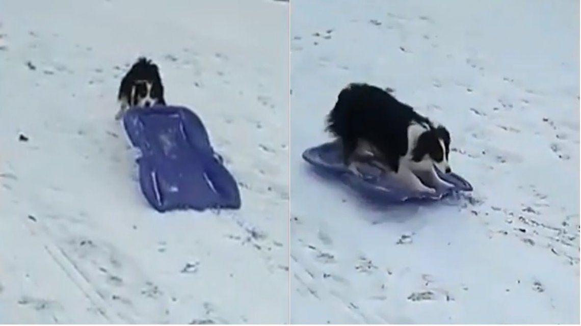 Un perro subió un trineo en una loma y se deslizó por la nieve