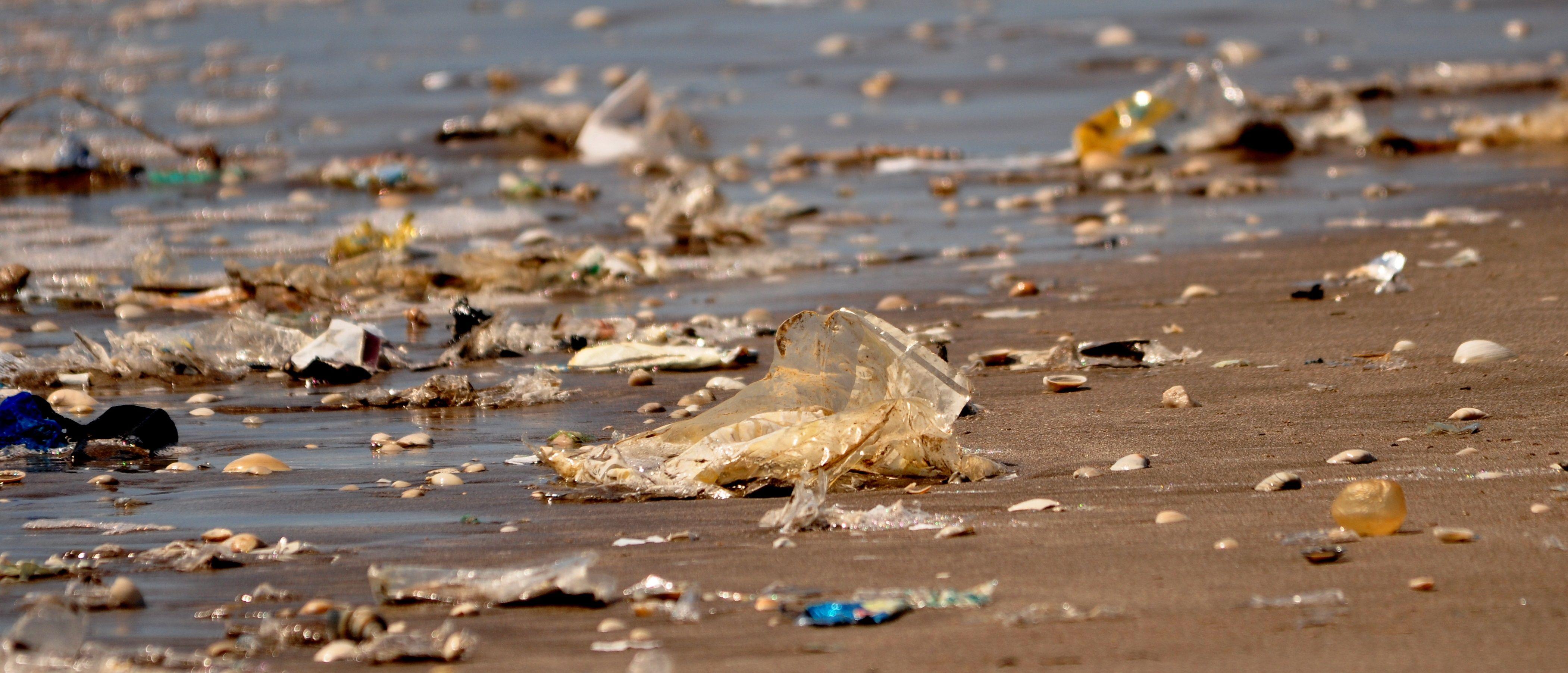 La basura y la falta de alimento