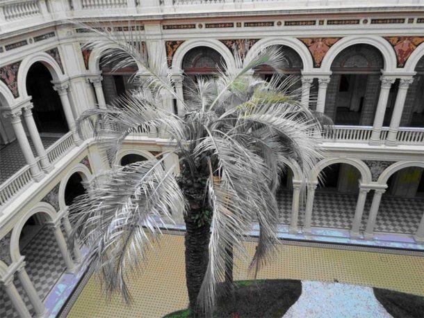 <div>La palmera muerta, en la Casa Rosada.<div><div><br></div><div><br></div></div></div><div></div>