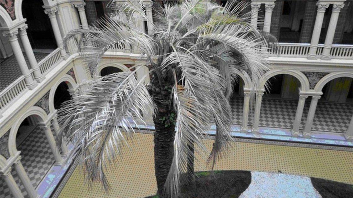 La palmera muerta