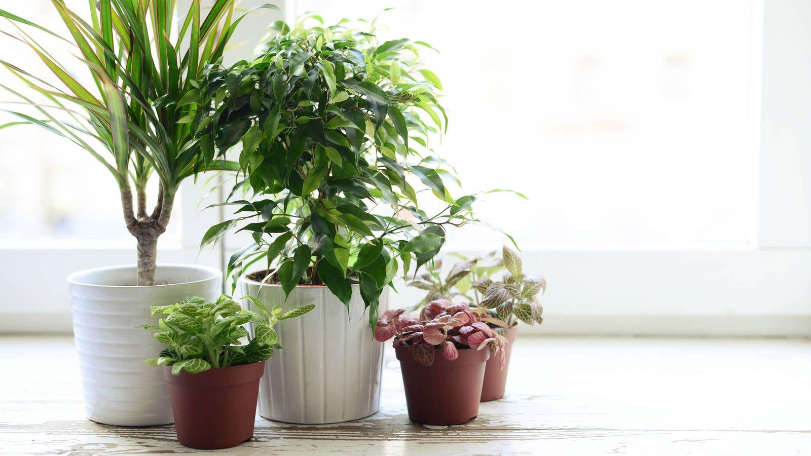 Las plantas que purifican tu casa