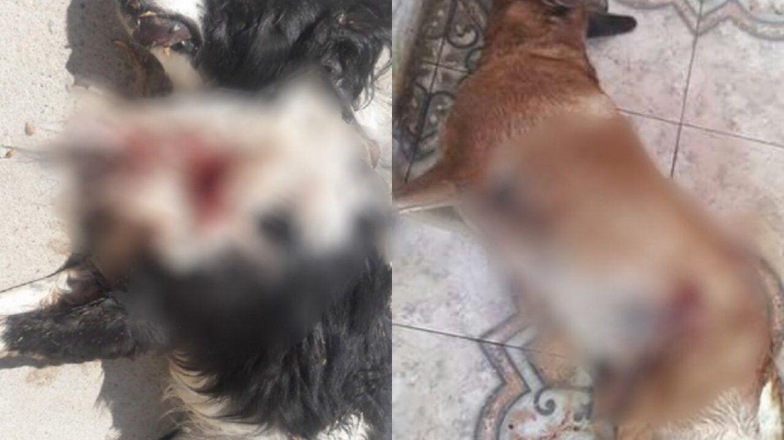 Mató dos perros a balazos a metros de una comisaría