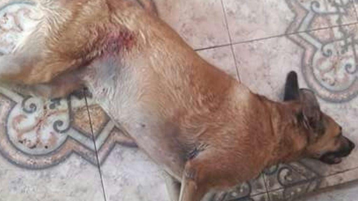El perro fue asesinado frente a varios niños en la vereda.