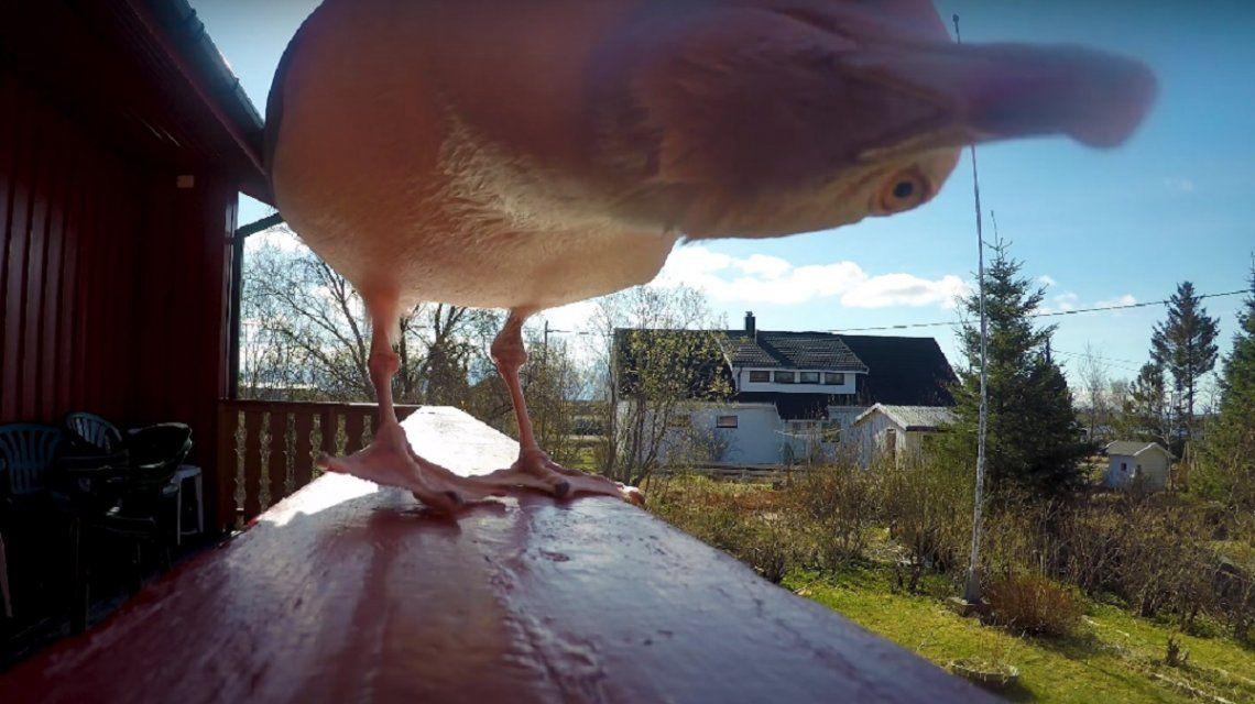 Una gaviota se robó una GoPro