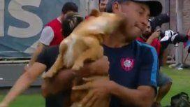 Un perro invadió la cancha de San Lorenzo
