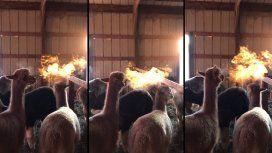 Un granjero filmó a una llama que aparenta expulsar fuego por su boca