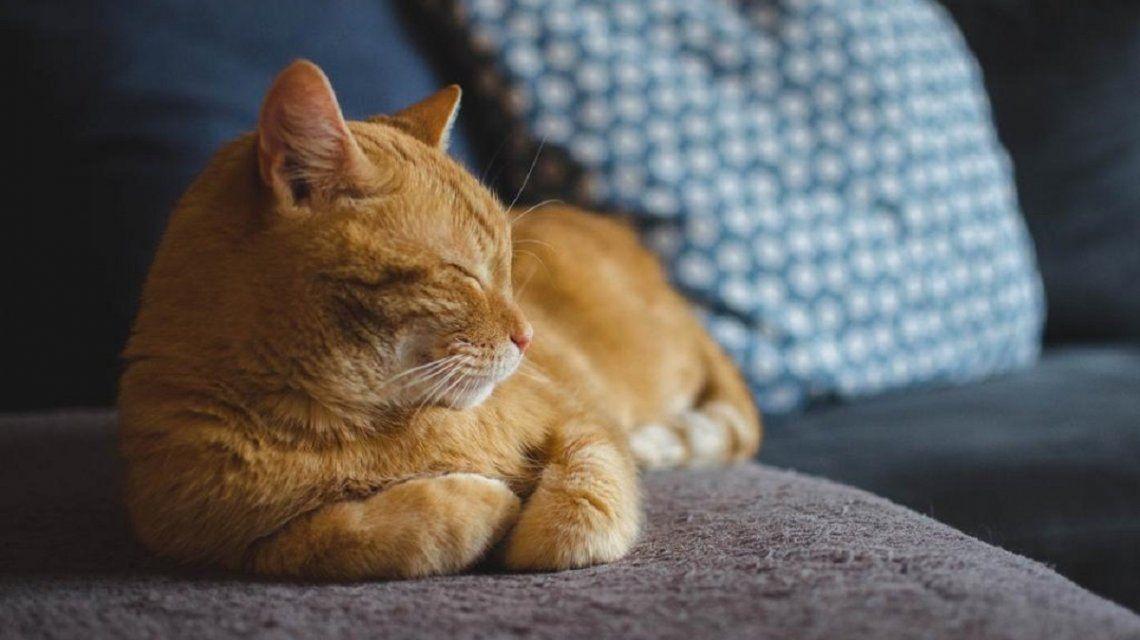 El gato Gerry heredó alrededor de 30.000 euros