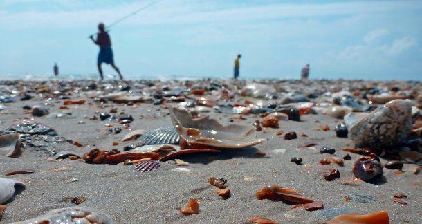 <p>La Isla Shelly le debe su nombre a la gran cantidad de caracoles -shell, en inglés-</p>