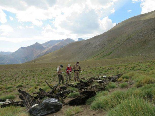 Encontraron 34 cóndores muertos en Mendoza