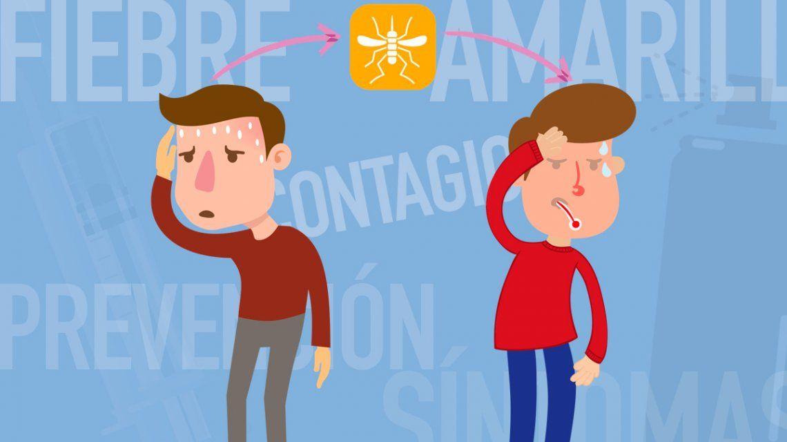 Las claves de la fiebre amarilla: contagio
