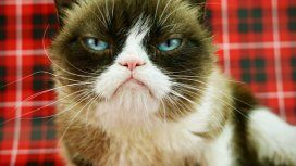 Grumpy Cat ganó un juicio una vez... y lo odia