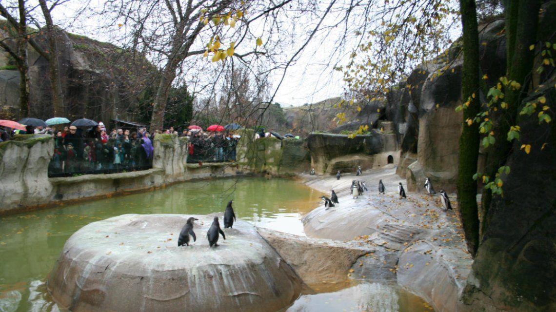 El público tuvo que evacuar el zoológico de Vincennes por los monos sueltos