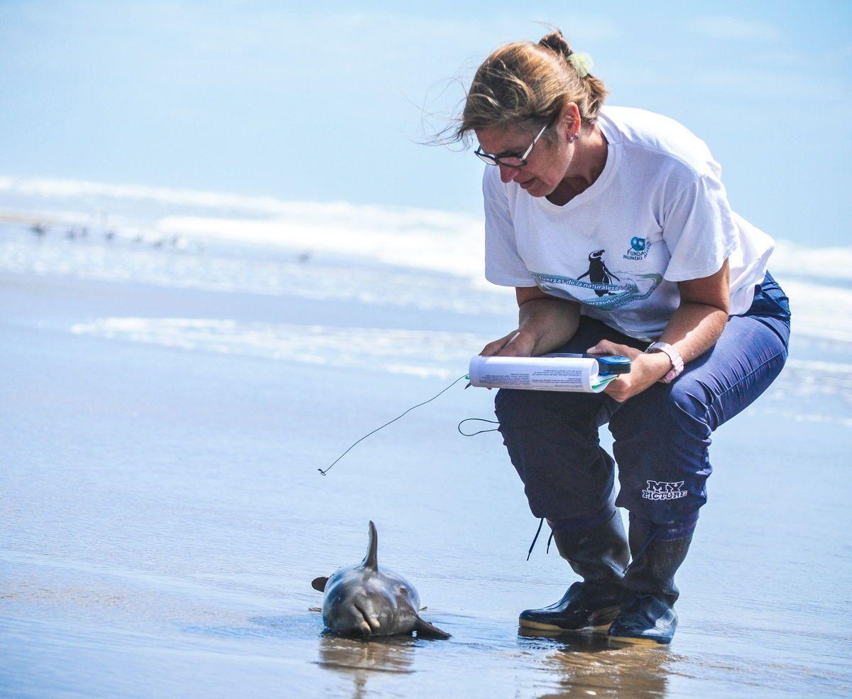Conmoción por la aparición de 14 delfines muertos en las playas del Partido de la Costa