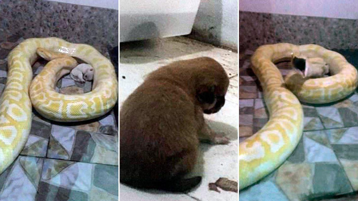El zoológico del horror: alimentan a las pitones con cachorros