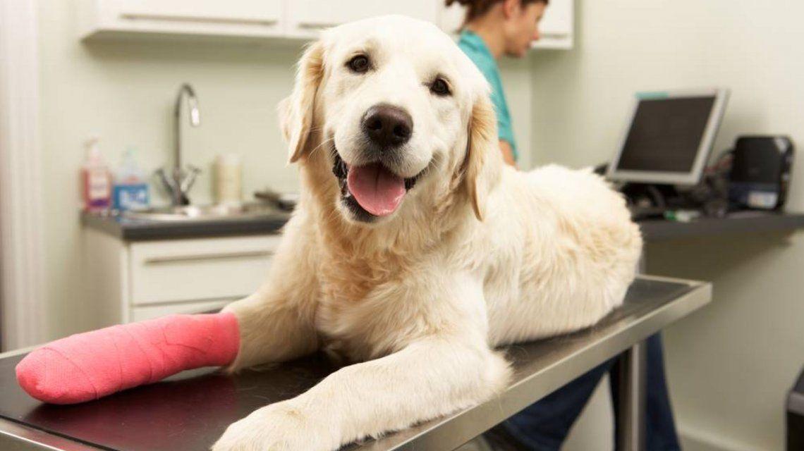 En España prohibieron cortar la cola, las orejas o las cuerdas vocales de los perros