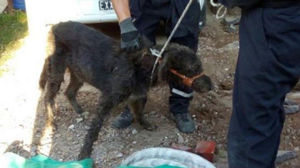 Dramático rescate de un perro que quedó atrapado en una cañería