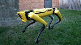 ¿Es el futuro? El perro robot que revoluciona al mundo: abre la puerta y la sostiene para permitir el paso