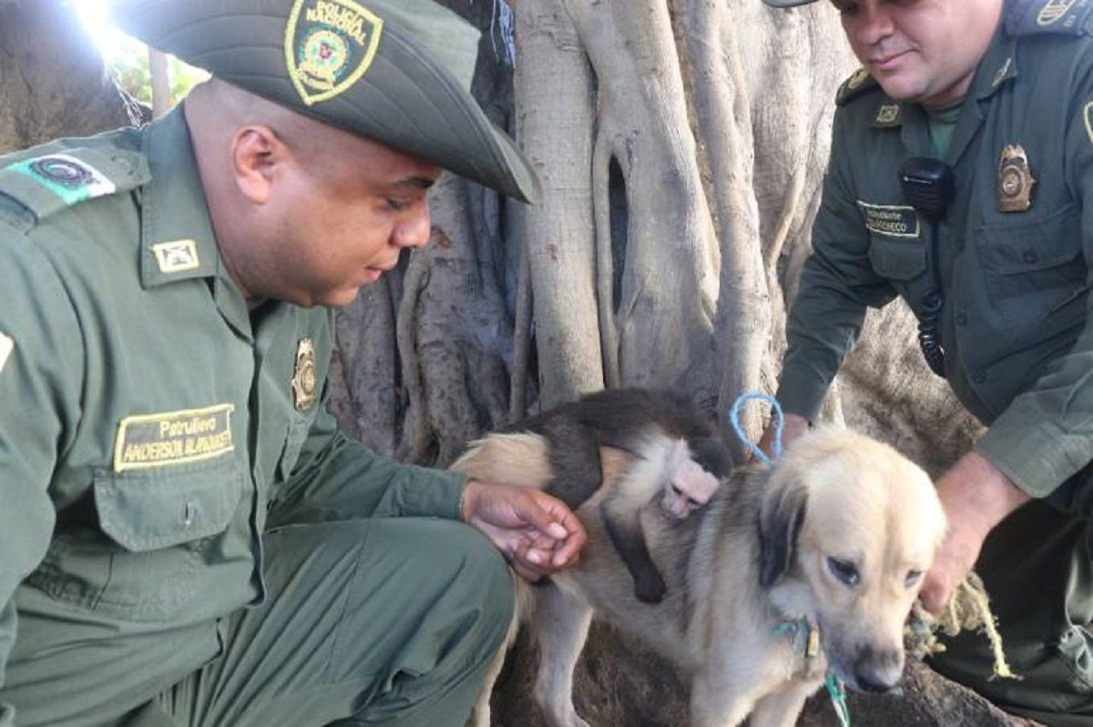 Una perra adoptó un mono
