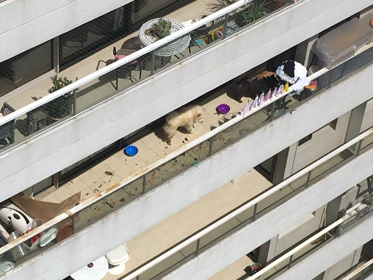 El balcón del departamento de More Rial