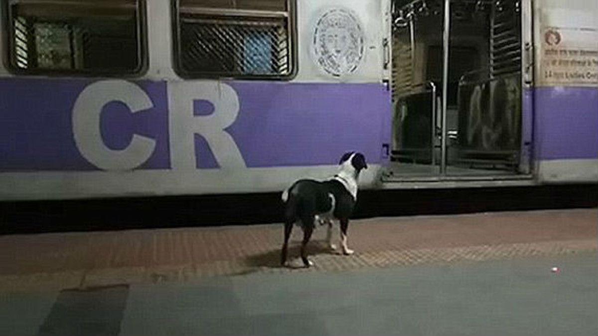Como Hachiko, una perra espera siempre el mismo tren cada noche