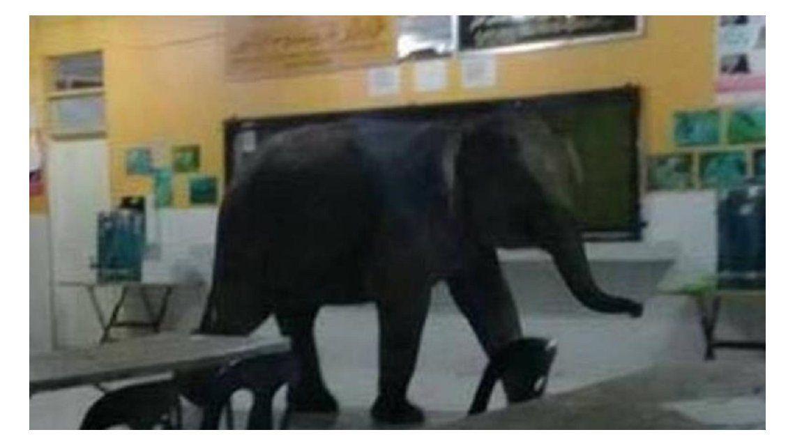 VIDEO: Un elefante se metió en una escuela y tuvieron que desalojarla