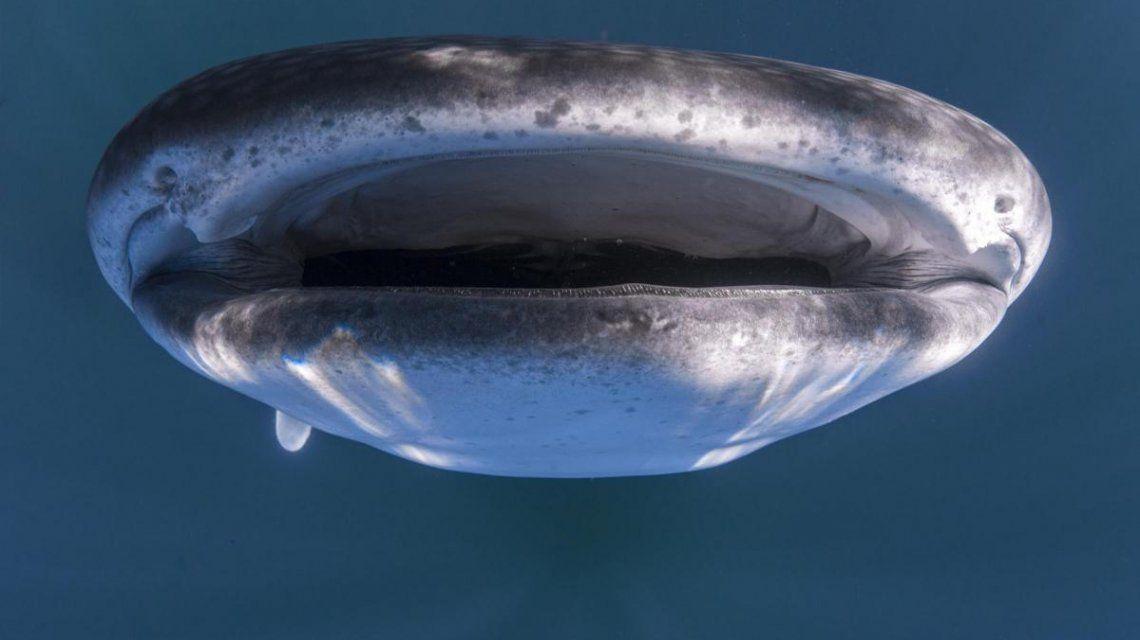 Una imagen que parece sacada de la película Tiburón
