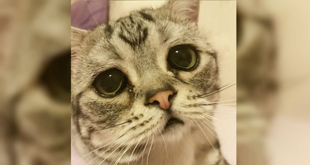Le sale perfecto la mirada de gato con botas de Shrek