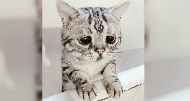 Luhu, el contendiente chino de Grumpy Cat