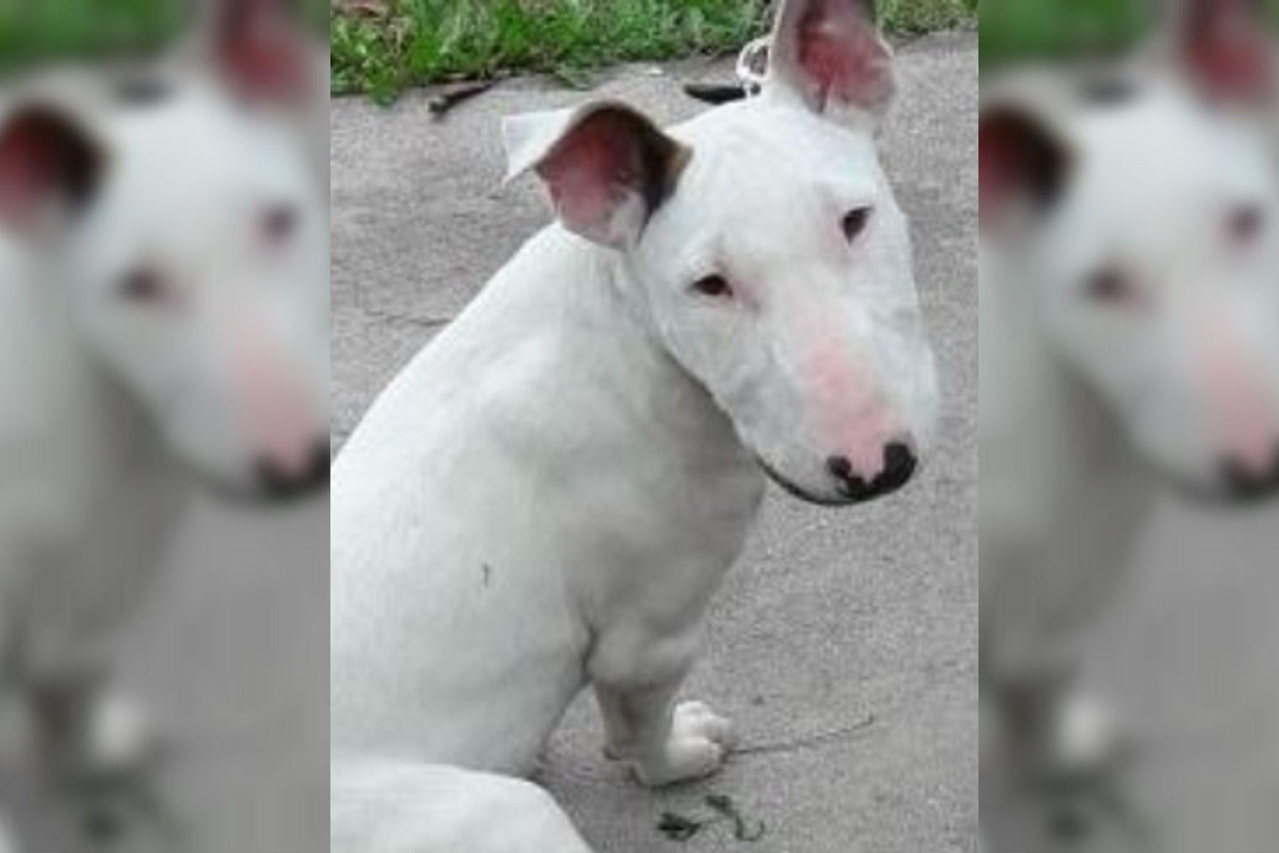 Mar del Plata: amenazaron de muerte a un chico de 13 años para robarle el perro