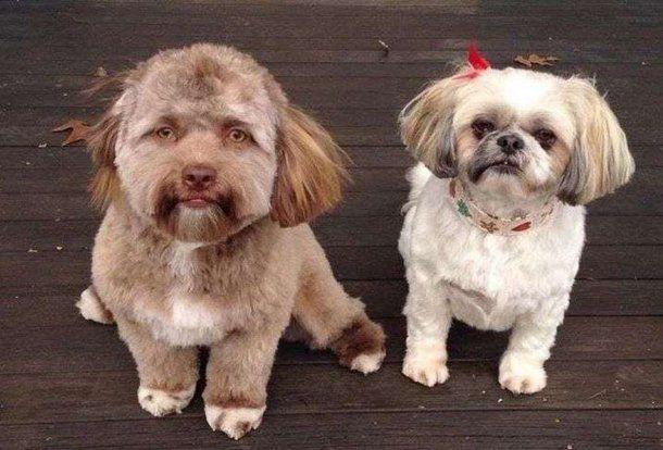 Bob, el perro con cara de humano.