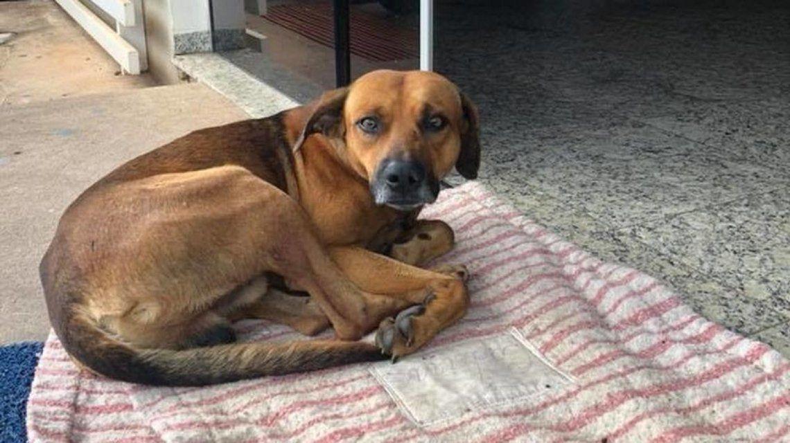 Brasil: un perro espera a su dueño en la puerta del hospital en el que murió