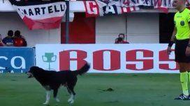 Un perro invadió la cancha en Chacarita vs Racing