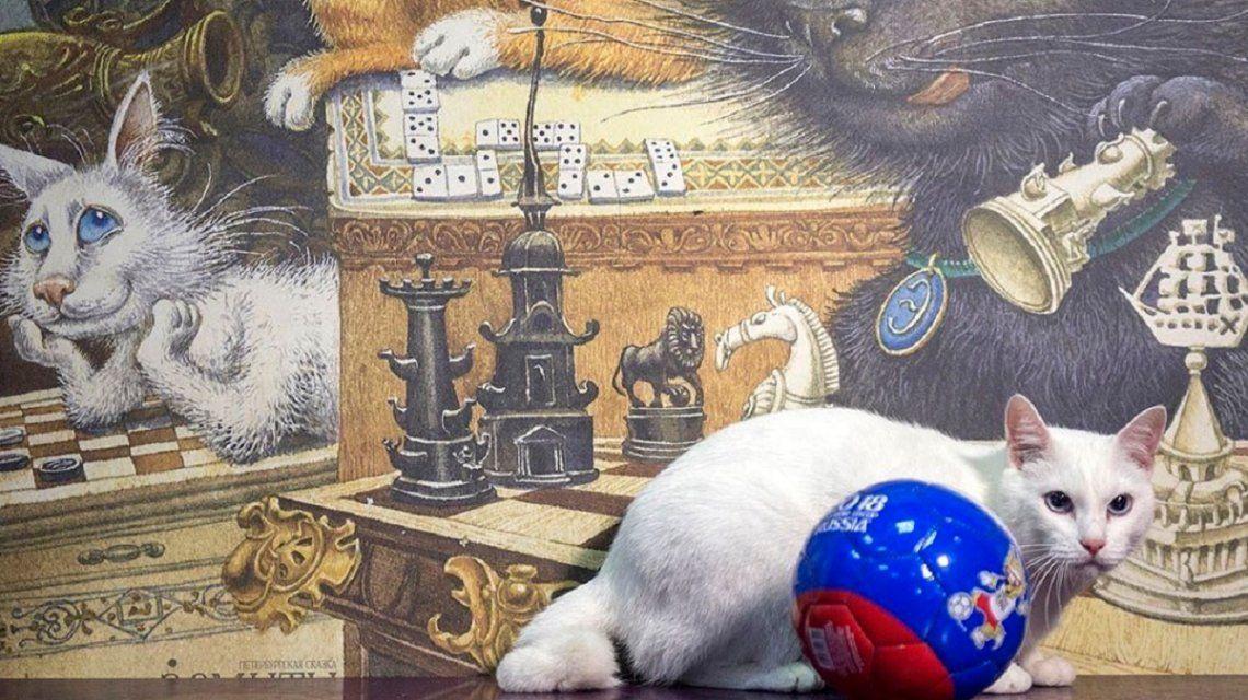 Aquiles, el gato sordo que será el sucesor del pulpo Paul en el Mundial de Rusia