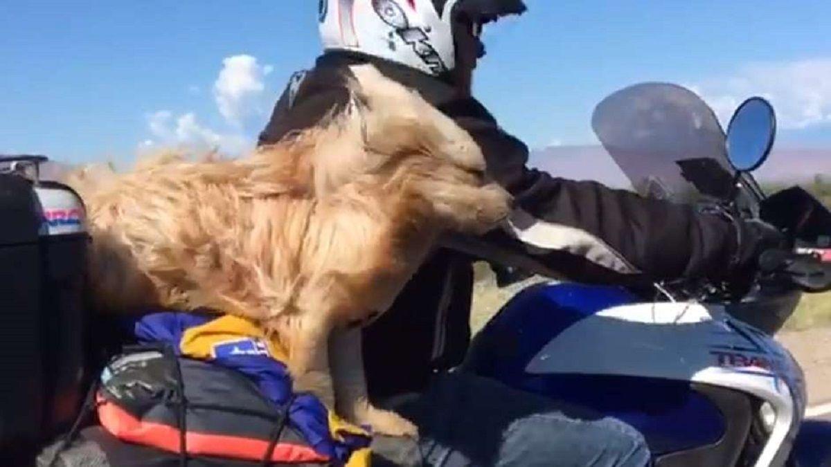 Pocho, el simpático perro que recorre junto su dueño el país en moto