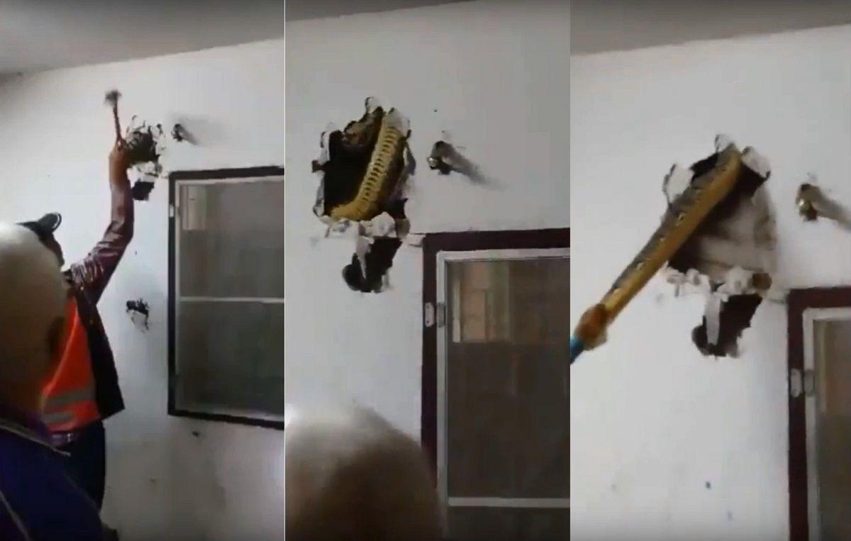 Sacaron una pitón de una pared
