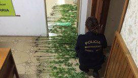 La Policía también confiscó plantines de marihuana y armas