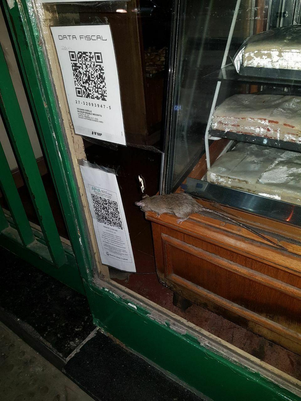Dos ratas se pasean por una panadería en Caballito