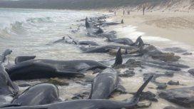 Aparecieron 150 ballenas varadas en la costa de Australia: sobrevivieron seis