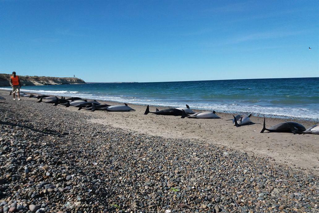 El panorama es desolador en las costas de Puerto Madryn