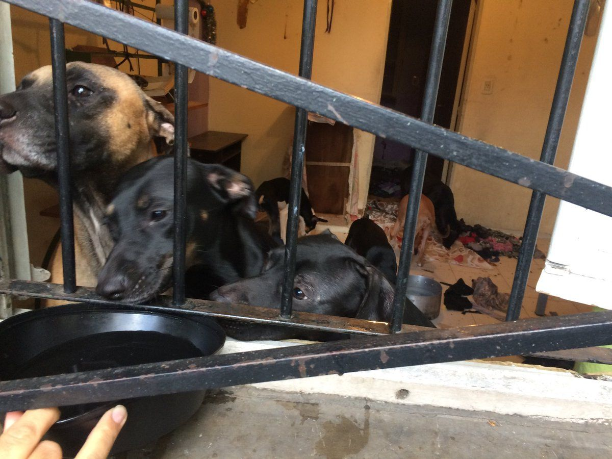 Abandonó a 10 perros en el departamento que alquilaba y los vecinos piden ayuda para adoptarlos