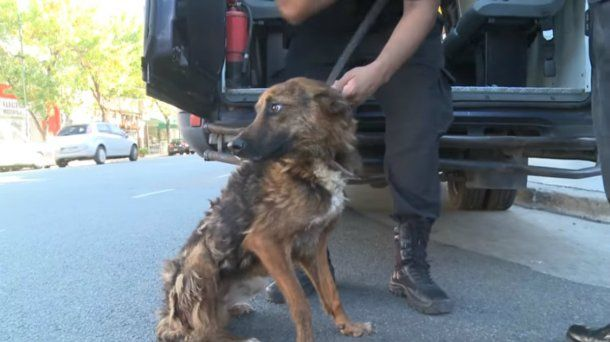 Los perros fueron rescatados esta semana