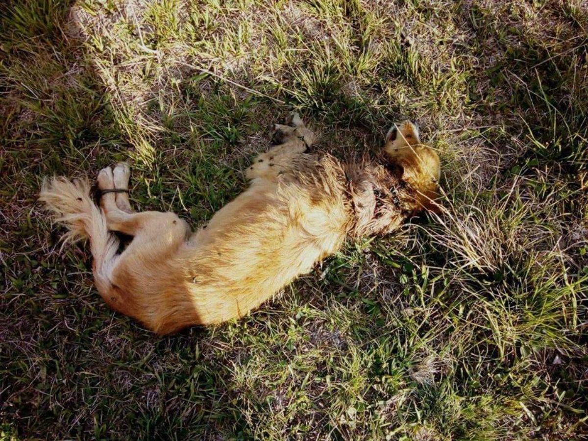 El perro fue abandonado atado a la intemperie