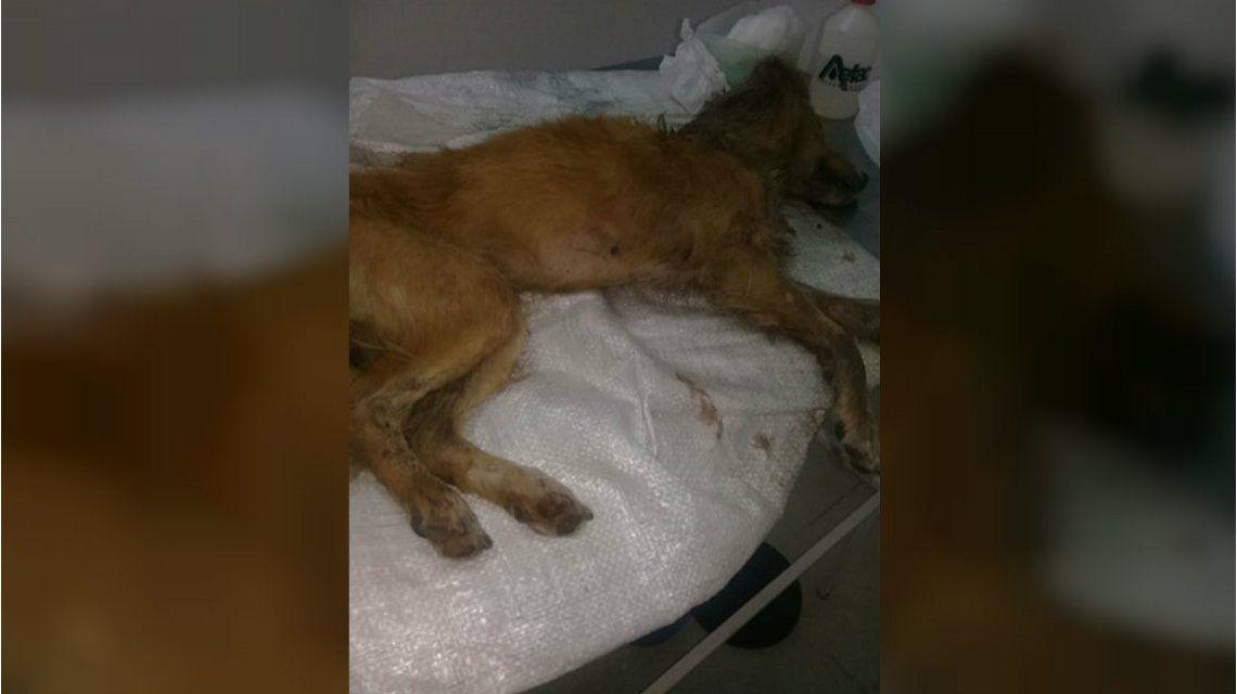 Rescatan a un perro que fue abandonado a la intemperie con las patas atadas