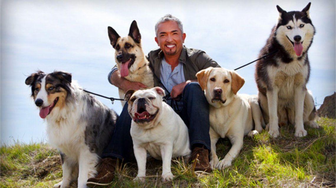 ¡Bien encantados! Los perros de Cesar Millán evitaron un robo en su casa