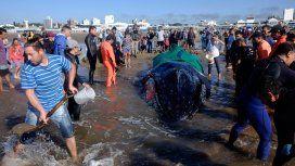 Intentan salvar a una ballena encallada en Punta Mogotes